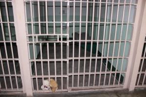 Die Flitterbären hinter Gittern