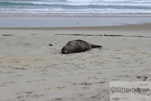und vorbei an schlafenden Robben