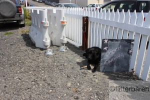 Hunde Parkplatz in Oamaru